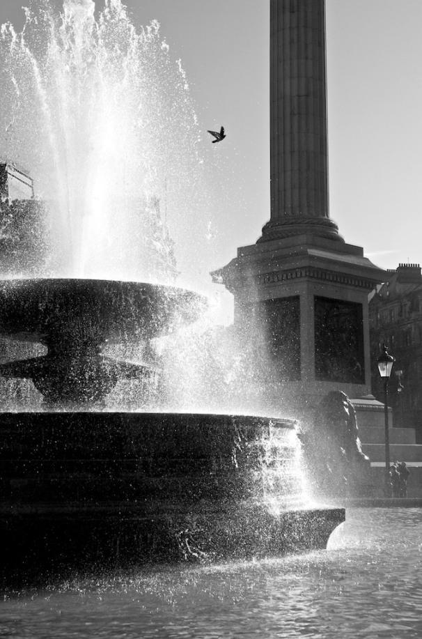 London, trafalgar square, bird in flight